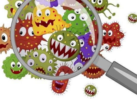 home bacteria